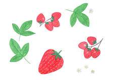Watercolor strawberry set Royalty Free Stock Image