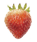 Watercolor  with a Strawberry Royalty Free Stock Image