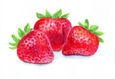 Watercolor strawberry  Royalty Free Stock Images