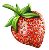 Watercolor strawberry  on white background. Stock Photos
