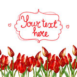 WATERCOLOR strip seamless border WITH PAINTED RED TULIPS Royalty Free Stock Photography