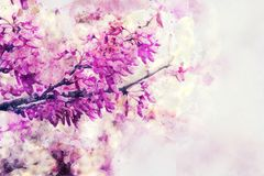 Watercolor style and abstract image of cherry tree flowers. Watercolor style and abstract image of cherry tree flowers Stock Photography