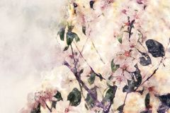 Watercolor style and abstract image of cherry tree flowers. Watercolor style and abstract image of cherry tree flowers Royalty Free Stock Photos