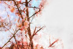 Watercolor style and abstract image of cherry tree flowers. Watercolor style and abstract image of cherry tree flowers royalty free illustration