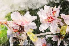 Watercolor style and abstract image of cherry tree flowers. Watercolor style and abstract image of cherry tree flowers Stock Images