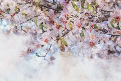 Watercolor style and abstract image of cherry tree flowers. Watercolor style and abstract image of cherry tree flowers Stock Image
