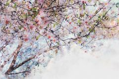 Watercolor style and abstract image of cherry tree flowers. Watercolor style and abstract image of cherry tree flowers Royalty Free Stock Photography
