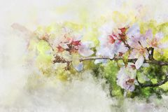 Watercolor style and abstract image of cherry tree flowers. Watercolor style and abstract image of cherry tree flowers Royalty Free Stock Photo