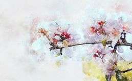 Watercolor style and abstract image of cherry tree flowers. Watercolor style and abstract image of cherry tree flowers Stock Photo