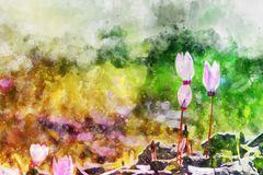 Watercolor style and abstract image of cyclamen flowers. Watercolor style and abstract image of cyclamen flowers Stock Photos