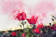 Watercolor style and abstract image of red poppy in the green field. Watercolor style and abstract image of red poppy in the green field Stock Photos
