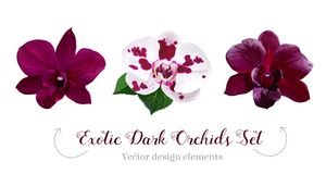 Watercolor style dark orchid flowers set. Plum colored, purple, white and pink speckled. Vector illustration for simple, natural spring floral wedding design royalty free illustration
