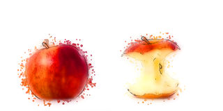 Watercolor style draw two apples Stock Photos