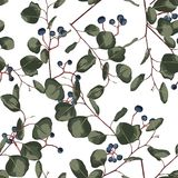 Watercolor style floral seamless pattern with eucalyptus. Hand painted pattern with branches and leaves of silver dollar and blue. royalty free illustration