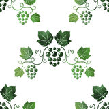 Watercolor style green grape vines seamless Royalty Free Stock Image