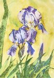 Watercolor and stylization of flowers in one drawing. royalty free illustration