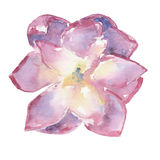Watercolor succulent Στοκ φωτογραφίες με δικαίωμα ελεύθερης χρήσης
