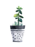 Watercolor succulent in a flowerpot. Stock Photography