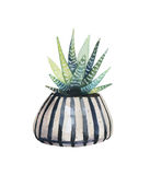 Watercolor succulent in a flowerpot. Royalty Free Stock Photos