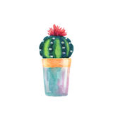 Watercolor succulent in a flowerpot.  Stock Images