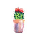 Watercolor succulent in a flowerpot. Isolated. Stock Photo