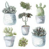 Watercolor succulent green plants collection illustration, isolated on white background. Watercolor succulent plants collection illustration, isolated on white Stock Image