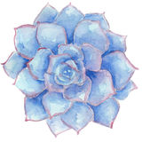 Watercolor succulent Royalty Free Stock Photos