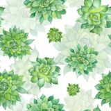 Watercolor Succulent Pattern on White Background Royalty Free Stock Photos