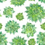 Watercolor Succulent Pattern on White Background Royalty Free Stock Images