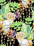 Watercolor succulents Στοκ εικόνα με δικαίωμα ελεύθερης χρήσης