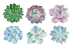 Watercolor succulents set. Set of floral elements in a watercolor style. Succulents painted in watercolor. Elements for design of invitations, movie posters Royalty Free Stock Image