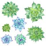 Watercolor Succulents Set Stock Photos