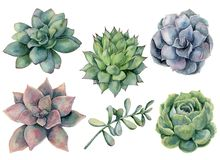 Free Watercolor Succulents Set. Hand Painted Green, Violet, Pink Cacti Isolated On White Background. Botanical Illustratio Royalty Free Stock Photos - 135060338