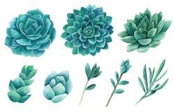 Watercolor succulents vector clip art. Green cactus clipart. Set. Blue cacti royalty free illustration