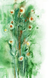 Watercolor -Summer- Royalty Free Stock Images