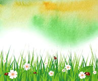 Watercolor summer background with green grass Stock Photo