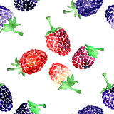 Watercolor  summer blackberry and raspberry pattern. On white background Stock Photos