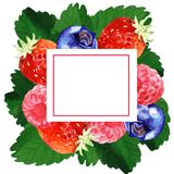 Watercolor summer floral frame illustration. Watercolor summer and spring floral frame illustration with berry isolated on white background Royalty Free Stock Images