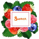 Watercolor summer floral frame illustration. Watercolor summer and spring floral frame illustration with berry isolated on white background Stock Photography
