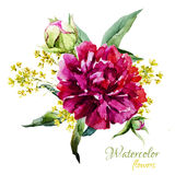 Watercolor summer flowers Royalty Free Stock Photo