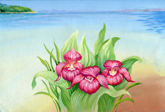 Watercolor summer landscape with flowers. And shoreline Stock Photography