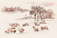 Watercolor summer landscape with sheep Royalty Free Stock Photos