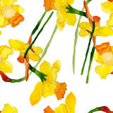 Watercolor summer narcissus flower. Watercolor narcissus flower seamless pattern summer vector eps 8 stock illustration