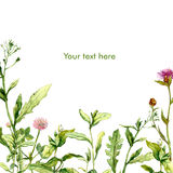 Watercolor summer postcard with meadow grass Royalty Free Stock Photography