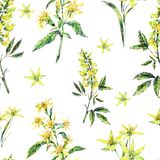Watercolor summer seamless pattern of medicinal flowers, wildflowers. Watercolor summer seamless pattern of yellow medicinal flowers, wildflowers. Botanical Stock Images