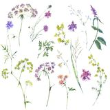 Watercolor summer set of flowers, wildflowers. Stock Image