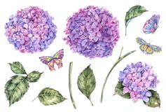 Watercolor summer set of pink flowers hydrangea, leaves, buds and butterflies royalty free illustration
