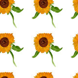 Watercolor sunflower seamless summer pattern Royalty Free Stock Photo