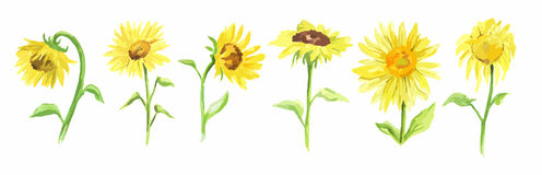 Watercolor sunflower set. Stock Photo