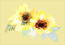 Watercolor sunflowers Royalty Free Stock Images